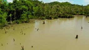 Moerasland in het regenwoud Siargao, Filippijnen stock videobeelden