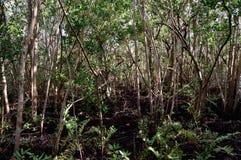 Moerasland het Zuid- van Florida en mangrovebos Royalty-vrije Stock Foto's