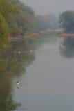 Moerasland met vogels Royalty-vrije Stock Foto