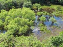 Moerasland of moeras Stock Foto