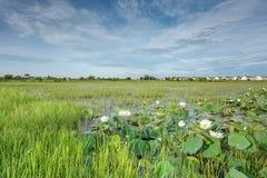 Moerasland in Natuurreservaat, Gevestigde Nong Dea Swamp in Udonthani Stock Foto's