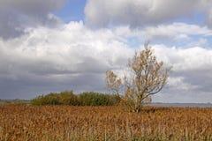 Moerasland in Nedersaksen Stock Foto's