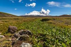 Moerasland in paramos van de Antisana-vulkaan Royalty-vrije Stock Afbeeldingen