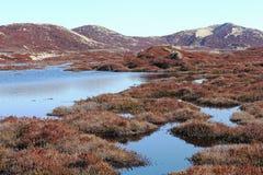 Moerasland tussen de duinen op het Eiland Sylt Stock Foto