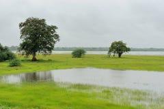 Moerasland van Nationaal Park Yala stock afbeelding