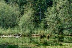 Moerasland in Vreedzaam Noordwesten stock afbeelding