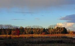 Moeraslandlandschap met kleurrijke de herfstbomen stock afbeeldingen