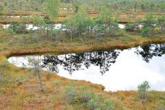 Moeraslandschap stock afbeeldingen