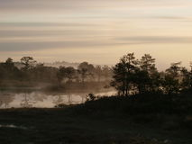 Moeraslandschap bij zonsopgang Royalty-vrije Stock Afbeeldingen