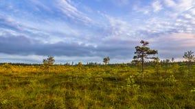 Moeraslandschap, Zuidelijk Finland Stock Afbeelding