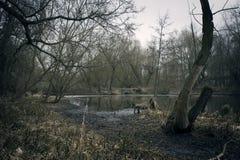 Moerassen in de herfst Koel donker meer in oerwoud Royalty-vrije Stock Foto