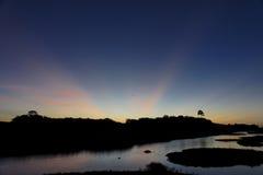 Moerassen Kaw in Frans Guyana Stock Afbeeldingen