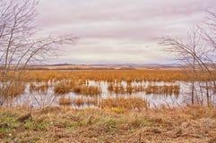 Moerassig Autumn Landscape royalty-vrije stock afbeelding