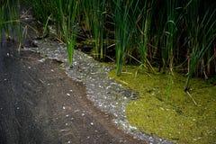Moerassig water met gras het groeien Royalty-vrije Stock Fotografie