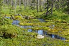 Moerassige bosrivier Stock Afbeeldingen