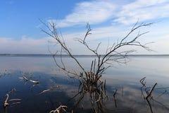 moerassige kust van het meer met takken Royalty-vrije Stock Afbeelding