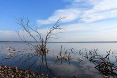 moerassige kust van het meer met takken Royalty-vrije Stock Foto