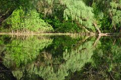 Moerassige rivier Royalty-vrije Stock Fotografie