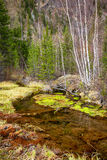 Moerassige stroom in Altay Taiga royalty-vrije stock foto's