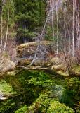 Moerassige stroom in Altay Taiga royalty-vrije stock afbeelding