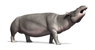 Moeritherium - Prehistoric Mammal. The Moeritherium is a prehistoric mammal that is related to the elephant; it lived 30 - 37 million years ago - 3d render vector illustration