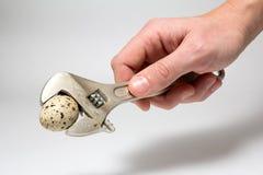 Moersleutel klaar om een ei te verpletteren Stock Foto