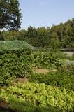Moestuin, Foto van een ecologische moestuin Royalty-vrije Stock Foto