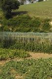 Moestuin, Foto van een ecologische moestuin Stock Afbeeldingen