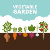 Moestuinbanner Organisch en Gezond voedsel Affiche met r vector illustratie
