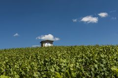 Moet Chandon Vineyard House Photographie stock libre de droits