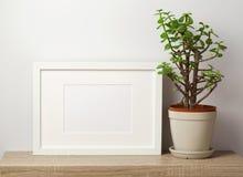 Mofa blanca del marco para arriba con la planta imagenes de archivo
