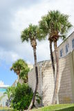curved palm tree Royalty Free Stock Photo