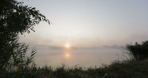 Mog som klänger yttersidan av sjön på soluppgångtimelapse, Finland stock video