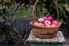 mogen äpplekorg Arkivfoto