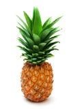 mogen ananas Arkivfoto