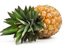 mogen ananas Fotografering för Bildbyråer
