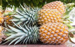 mogen ananas Arkivbilder