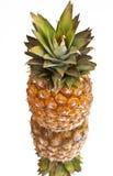 mogen ananasreflexion Fotografering för Bildbyråer
