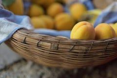 Mogen aprikos i bambukorg Arkivbilder
