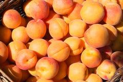 Mogen aprikos i en korg Royaltyfri Foto