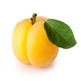 Mogen aprikos med den gröna leafen Fotografering för Bildbyråer