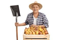 Mogen bonde som poserar med skyffeln och spjällådan av päron fotografering för bildbyråer