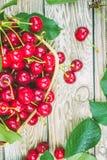 mogen Cherryred Fotografering för Bildbyråer