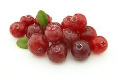 mogen cranberry arkivbilder