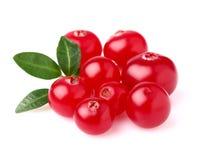 Mogen cranberry royaltyfri foto