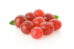 Mogen cranberry på white arkivfoton