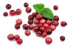 mogen cranberrymint royaltyfria foton