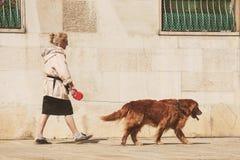 Mogen dam som går med hennes labrador royaltyfri fotografi