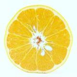 Mogen för tangerinMandarine för mandarin citrus isolerad apelsin på vit bakgrund Royaltyfri Bild