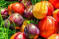 Mogen frukt på gräset i trädgården, persikor, plommoner royaltyfria foton